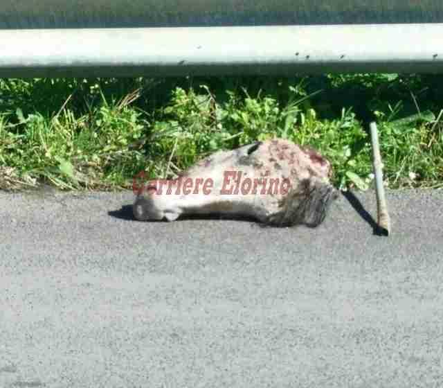Trovata carcassa di cavallo a Cava Timparossa. Un evento per ripulire e salvaguardare il luogo