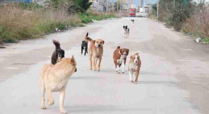 Mantenimento cani randagi: in un mese 6600 euro all'associazione Ivoc di Sortino