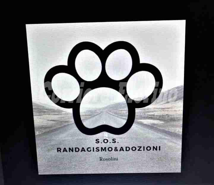 """La pagina A Zampa Tesa cambia in """"S.O.S Randagimo&Adozioni"""""""