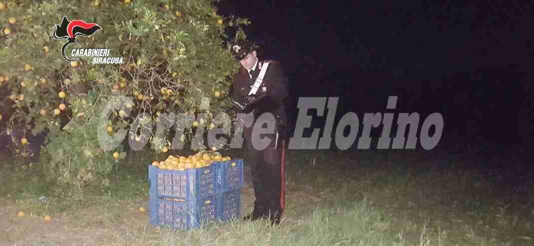 Rubano 250 kg di arance, arrestate due persone