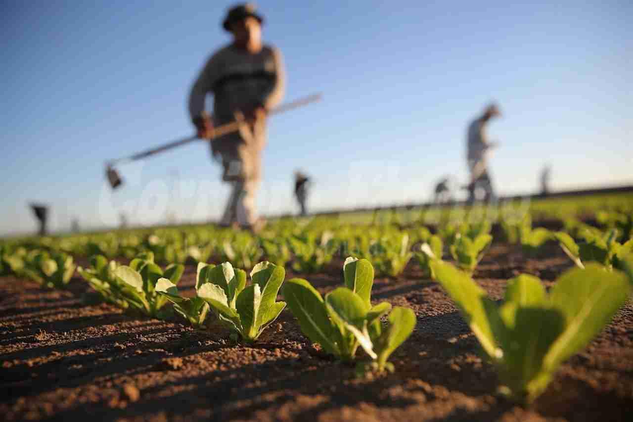 Ispica, costituita la consulta dell'Agricoltura. Si insedierà il 19 settembre