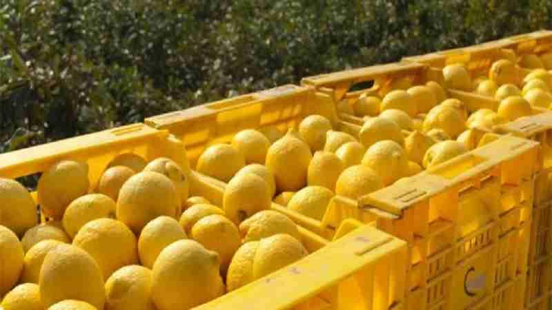 Rubavano limoni in Contrada Renna, arrestate tre persone in flagranza di reato